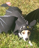 Creative costume ideas for dogs: Toothless Dragon Dog Costume