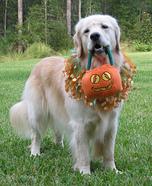 Trick-or-Treat Dog Costume