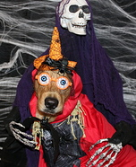 Tricks for Treats Dog Homemade Costume
