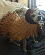 Turkey Dog Homemade Costume