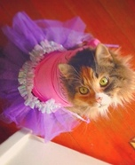 Tutu Cat Homemade Costume