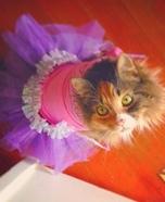 Tutu Cat Homemade Costume