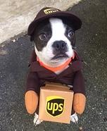UPS Dog Homemade Costume