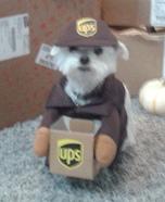 UPS Driver Dog Costume