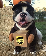 UPS Mailman Dog Costume