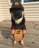 UPS Worker Dog Costume
