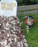 Vampire Cat Halloween Costume