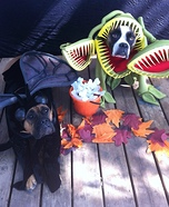 Creative costume ideas for dogs: Venus Flytrap and the Fly Halloween Costumes for Pets