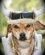 Viking Dog Costume