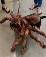 Viscous Tarantula Homemade Costume