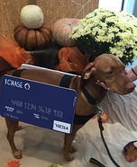 Vizsla Credit Card Homemade Costume