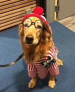 Waldo Dog Costume