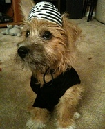 Homemade Pirate Costume for Dogs