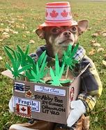 Weed Dog Homemade Costume
