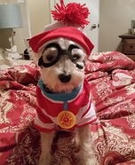 Where's Waldo Dog Costume DIY