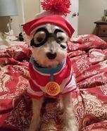 Where's Waldo Dog's Costume