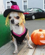 Wicked Witch Dog Costume
