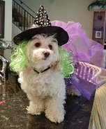 Wicked Witch Dog Homemade Costume
