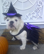 Wicked Witch of the West Coast Dog Costume