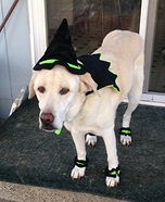 Witch Dog Homemade Costume