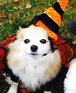 Witch Ginger Dog's Homemade Costume