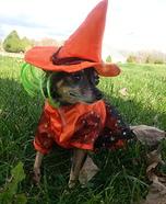 Witchy Wonderful Dog Homemade Costume