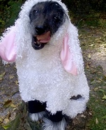 Wolf in Sheep's Clothing Homemade Costume