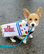 Wonder Corg Homemade Costume