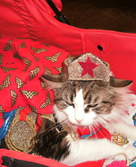 Wonder Woman Cat Homemade Costume