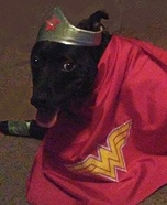 Wonder Woman Dogs Costume