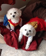 Wonder Women and Superman Dog Costumes