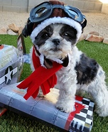 WW2 Fighter Pilot Dog Homemade Costume