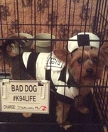 Yorkie Convict Homemade Costume