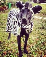 Homemade Zebra Costume for Dogs