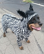 Zebra Dog Homemade Costume