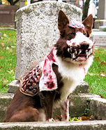 Zombie Dog Costume DIY