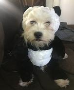 Zuzu the Shih Poo Panda Homemade Costume