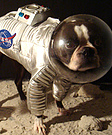 Dog in the Astronaut Costume