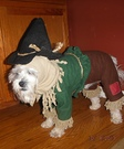 Cutest Scarecrow Dog Costume