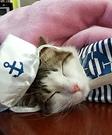 Drunkin' Sailor Sofia Cat Costume