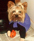 Trick-or-Treat Dog Costume
