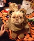DIY Ewok Dog Costume