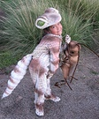 Animal costume ideas for kids - Gecko Costume
