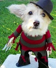 Homemade Freddy Krueger Costume for Dogs