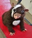 Homemade Guinea Pig Costume