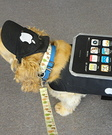 Homemade iPhone Costume for Dogs