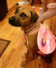 Butterfly Costume for Dogs