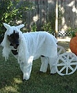 White Horse & Pumpkin Carriage Costume for dog