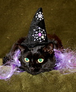Homemade Witch Cat Costume