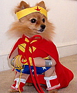 Cute dog dressed as Wonder Woman